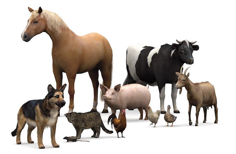 Proverbe si zicatori cu animale